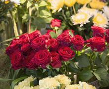 Blommor handlar om känslor men de ger inte bara glädje utan de ger också tröst vid sorg.