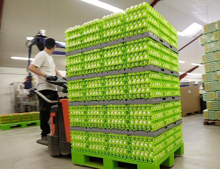 Västkustägg levererar normalt en miljon ägg i veckan i ekologiska förpackningar gjorda av returpapper.