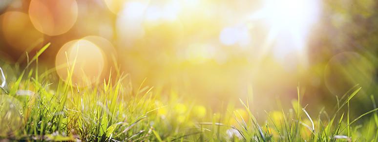 Skapa lugn och harmoni i ditt företagarliv